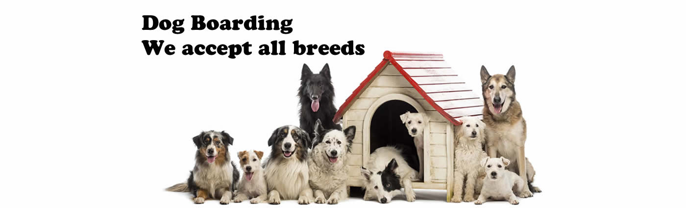 Dog boarding - we accept all breeds!